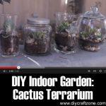 DIY Indoor Garden: Cactus Terrarium